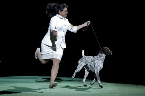 Handler Atkinson runs with CJ at the Westminster Kennel Club Dog show at Madison Square Garden in New York