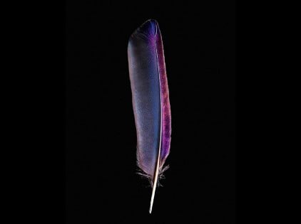 feathers (4)